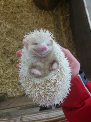 Happy Hedghog